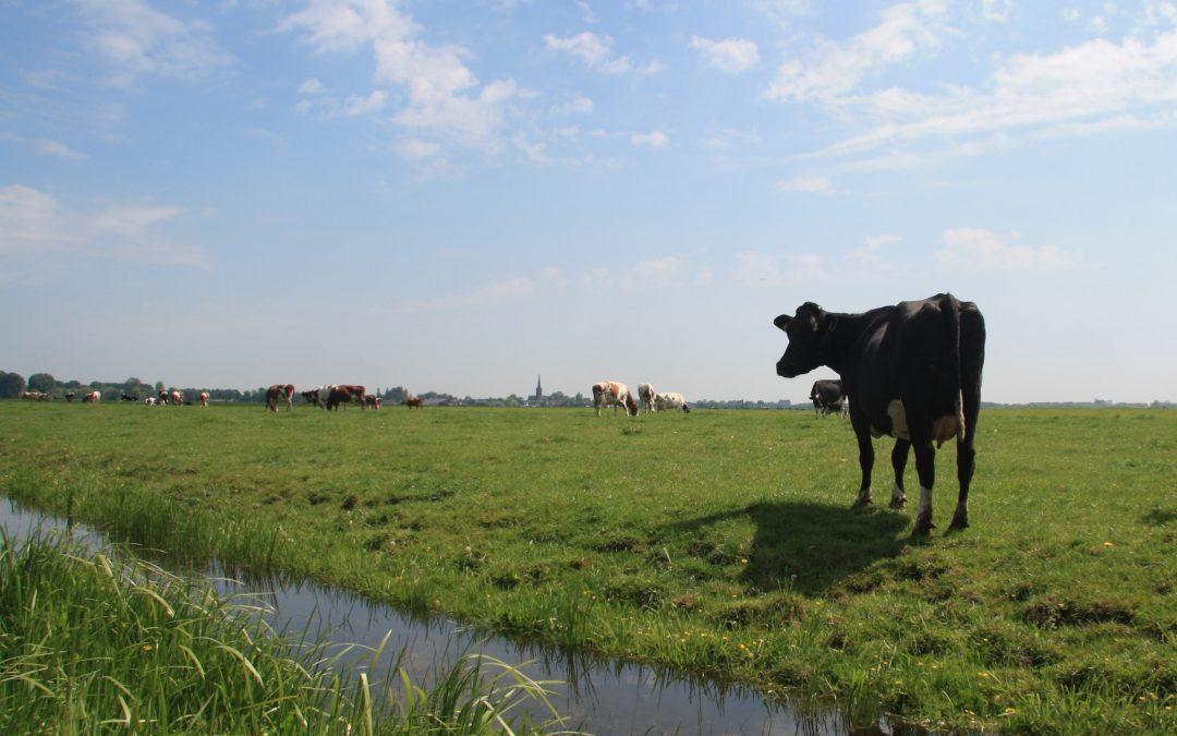 Regionale koolstofbanken voor het veenweidegebied