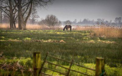 Friesland krijgt als eerste een koolstofbank voor veenboeren